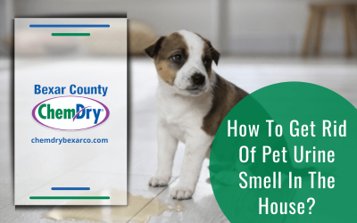 How To Get Rid Of Pet Urine Smell In The House?