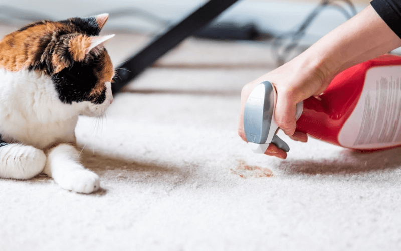 Remedies To Remove Cat Pee Smell