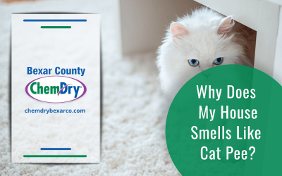 Why Does My House Smells Like Cat Pee?